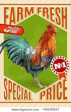 Healthy organic poultry meat sale and roosters for breeding  farm market price offer classic vintage poster vector illustration