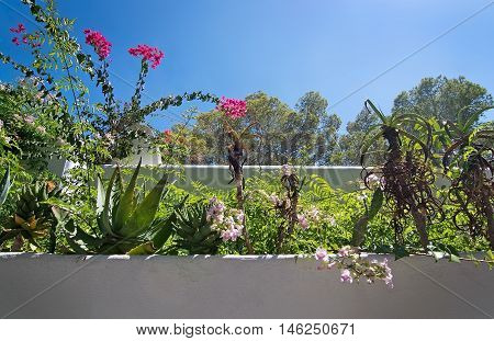 White Roughcast Wall With Green Subtropical Plants