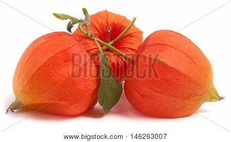 three closed husk tomatoes with leaf isolated on white background.