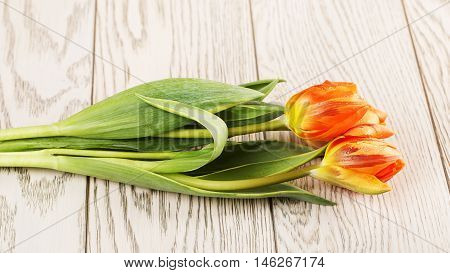 orange tulip flowers bouquet on wooden background