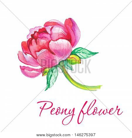 Watercolor flower, bloom flower, blossom flower, bud flower, botanical flower, floral flower, summer flower, valetine flower.