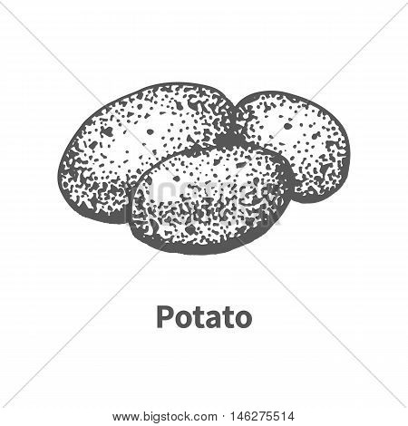 Vector illustration doodle black and white hand-drawn potato. Isolated on white background. The concept of harvesting. Vintage style.