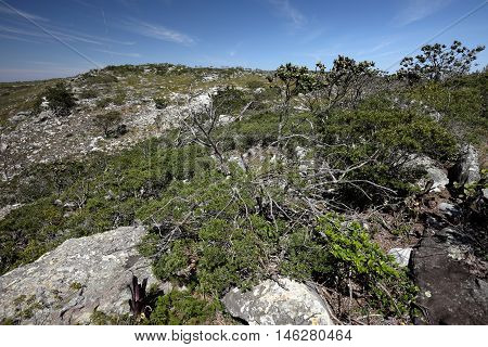 The caatinga landscape in North East Brazil