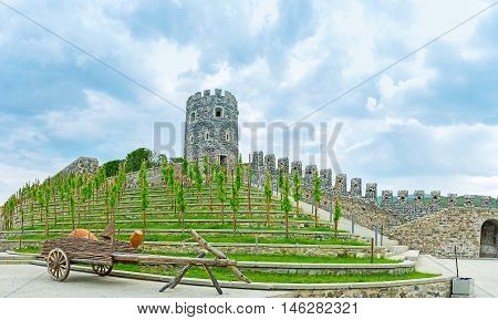 The grape vines on the hilly with the rampart and tower of Rabati Castle in Akhaltsikhe Georgia.