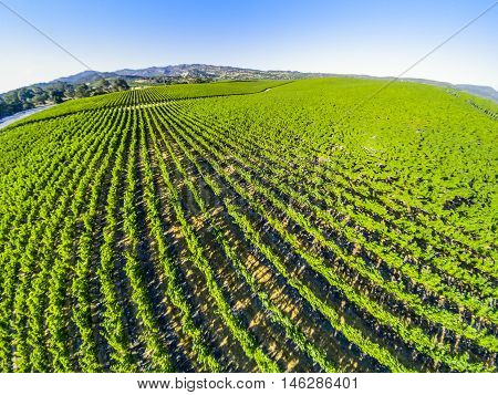 Spectacular aerial view of a vineyard in Napa Valley, San Francisco Bay Area in northern California.