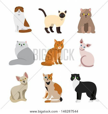 Cat breeds cute pet animal set vector illustration. Cat breed animal and cartoon different cats. Mammal character human friend cat breed animals icons. Character cat portrait friend feline.