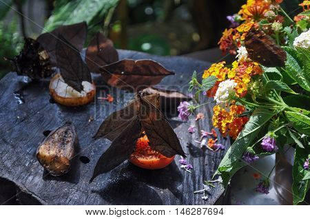 Butterfly in the order of Lepidoptera insect animal