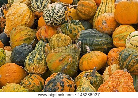 Background with mixed colorful ornamental pumpkins with various shapes.