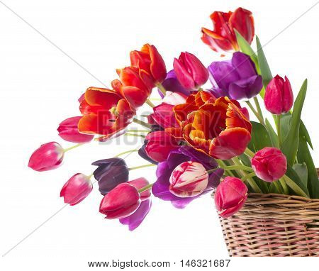Spring color tulips in a bouquet with pink, red beautiful flowers isolated on white