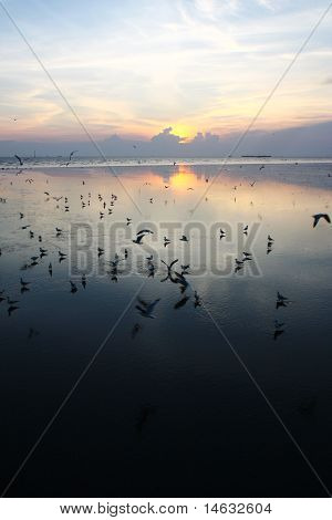 Seagull Sunset, South Of Thailand