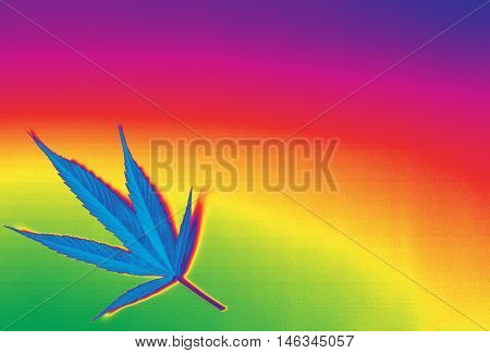 Beautiful rainbow marijuana ganja background and image