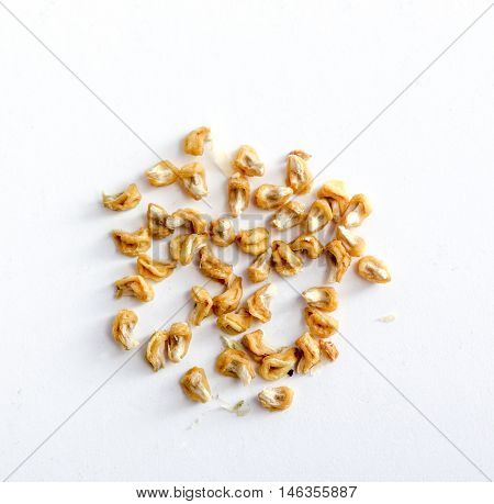 picture of aseeds of a dry okra isolated on the white backgroud.