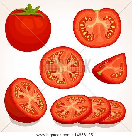 Set of different tomatoes isolated on background. Vector illustration. Whole sliced quarter half of a tomato fruit.