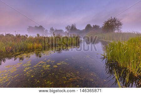 Misty Marshland River