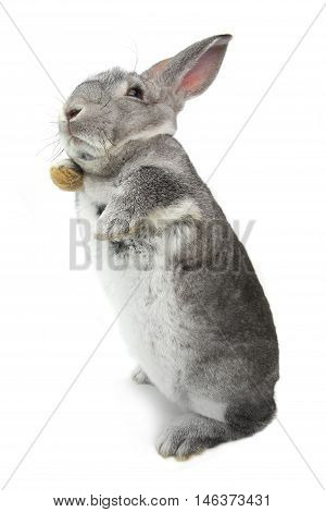 rabbit standing on hinder legs on a white background