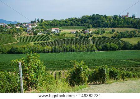 Valdobbiadene vineyards hills near Treviso, Veneto, Italy
