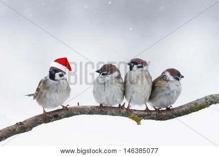 funny birds sparrows sitting on a branch in winter Christmas hats
