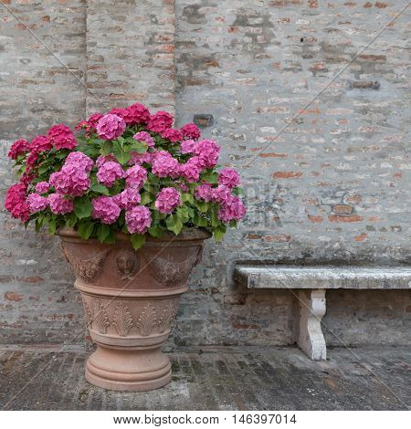 Bouquet Of Colorful Flowers And A Bench In A Garden Italy