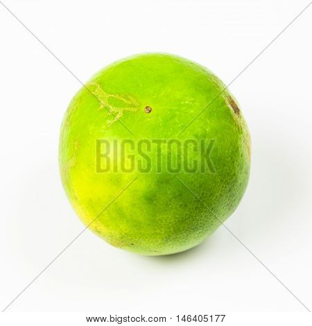 A Green lamon on isolated white background