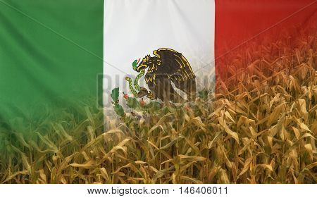 Nutrition food concept corn field in sunny afternoon light merged with fabric flag of Mexico