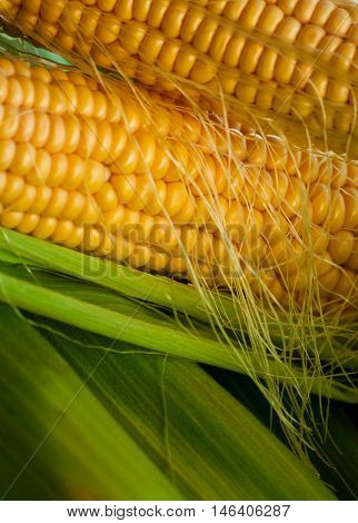 two pieces crude yellow corn with green leaves and hair lies on several closed cob, not cleared, natural look, vegetables in the upper part of the image