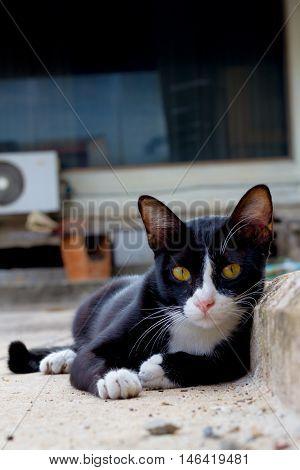 cats sleep on the concrete floor .