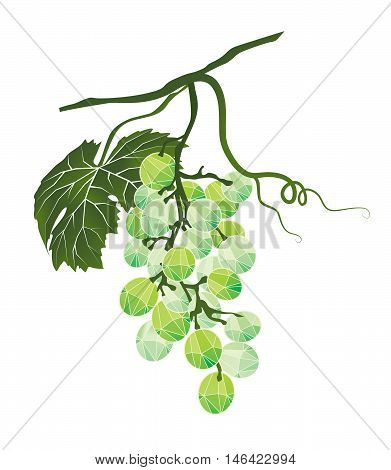 Mellow bunch of green grapes stylized polygonal