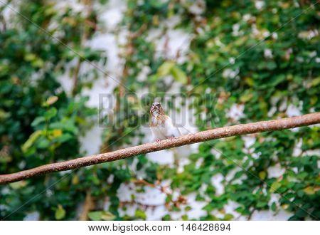 Dunedin, New Zealand - Febr 10, 2015: A Bird On A Branch In The Garden Of Larnach Castle