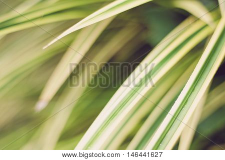 Leaves yellowish green close up background Plant background
