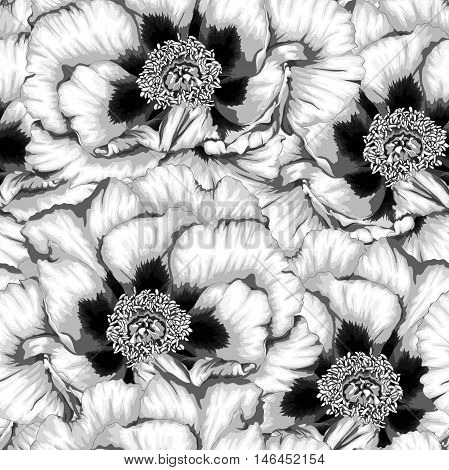 Beautiful monochrome black and white seamless background with flowers Plant Paeonia arborea (Tree peony). Hand-drawn with effect of drawing in watercolor