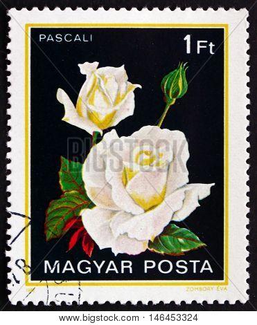 HUNGARY - CIRCA 1982: a stamp printed in Hungary shows Pascali Rose circa 1982