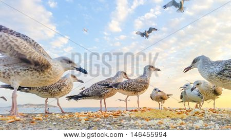 Hungry Seagulls Waiting for Food near the sea