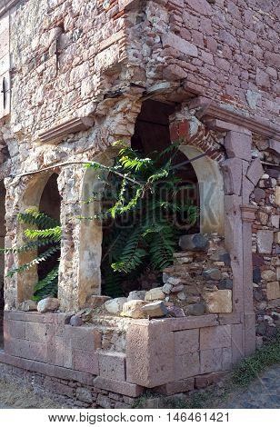 Plants grown inside the old church ruins in Cunda Island, Turkey