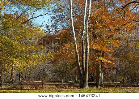 Great Falls state park in autumn in Virginia USA. Colorful deciduous trees on a bright sunny day in fall.