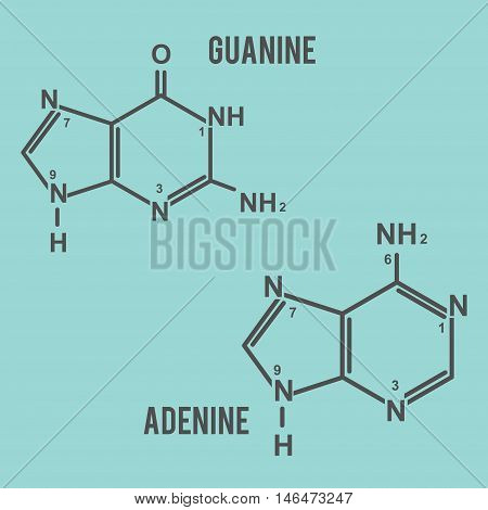 DNA guanine and adenine vector in eps 8 easy to edit