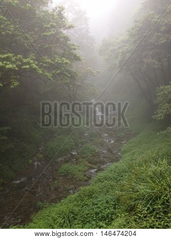 Alishan Chiayi City Taiwan primeval forest with fog