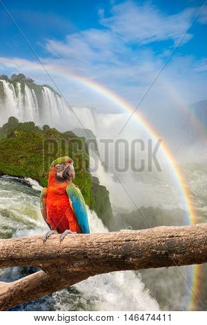 The Majestic Macaw Parrot At The Iguazu Falls