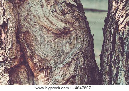 Old Wood texture close up (vintage colour)