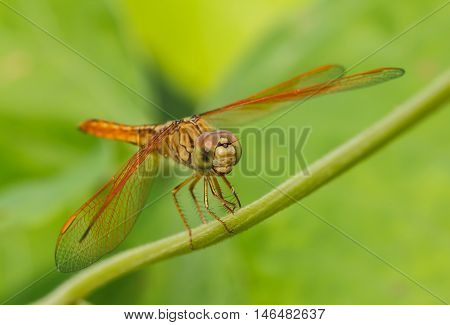 Dragonfly in the outdoors by natural outdoor