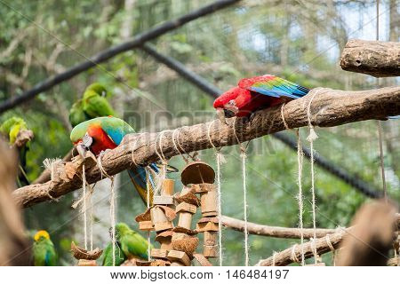 The Red, Blue And Yellow Macaw In Brazil