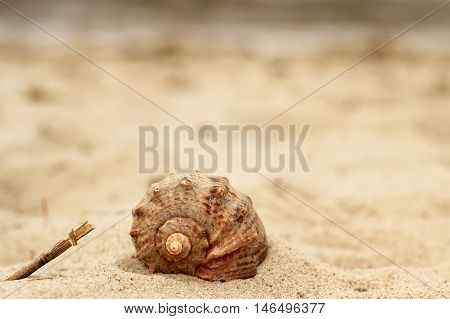 Beautiful snail shell, close-up lying on the yellow sand on sea background.