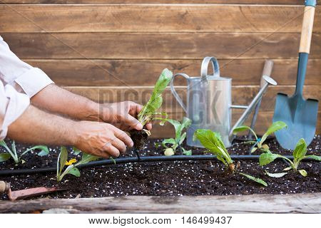 Organic garden with irrigation and small plants of artichokes