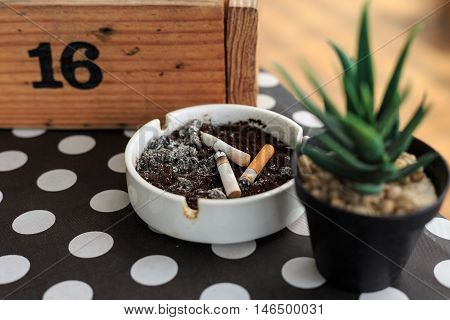 Cigarette stub on ashtray and small cactus