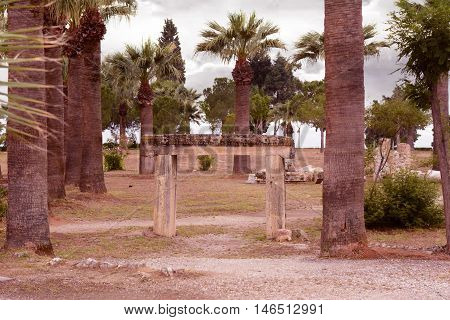 The remains of the old city. Three palm trees in the middle of the stone.