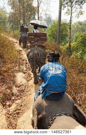 Chian Mai Thailand - March 07 2011 - Tourists enjoying elephant ride with a local Thai man in Maesa elephant camp