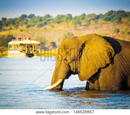 Tourists On Elephant Safari Africa