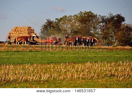 Lancaster County Pennsylvania - October 15 2015: Amish woman with two teams of horses accompanied by her son baling straw in a field on the family farm