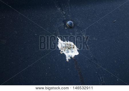turd emblazoned on the hood of a black car