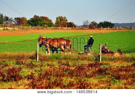 Lancaster County Pennsylvania - October 19 2015: Amish farmer plowing a field with a team of three donkeys