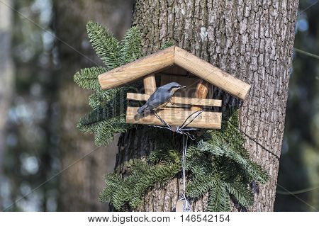 A nuthatch on a bird table in fall